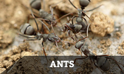"A group of ants interact with the word ""ants"" layered overtop"