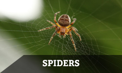 Spider Removal & Pest Control - Columbus, OH: A spider on a web