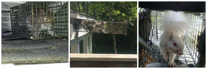 squirrel-collage