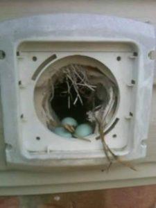 Bathroom Wall Fan >> Birds In Vents - Removal Of Bird Nesting & Mities Around Columbus, Ohio