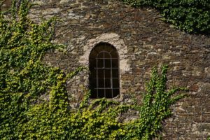 A stone wall with a semi-oval window covered with ivy