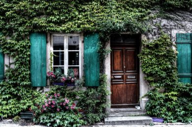 A House Covered With Ivy Is the Perfect Target for Problem Pests.