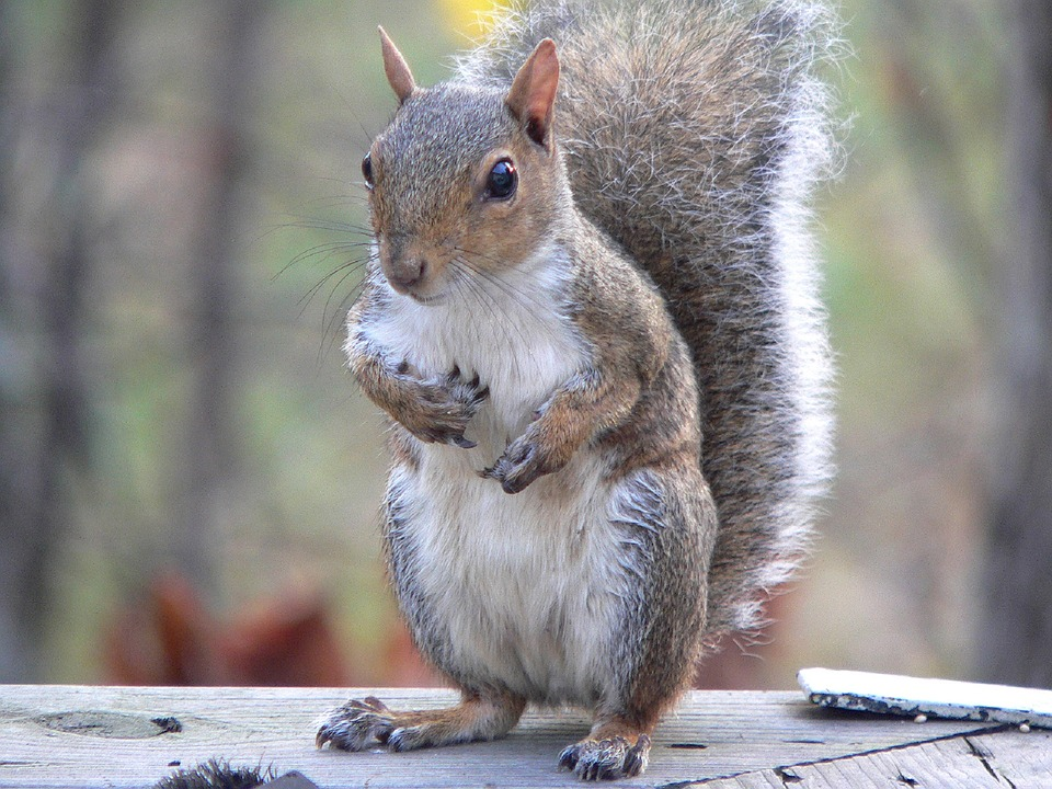 Squirrels Second Litters Amp Ohio Resident Concerns