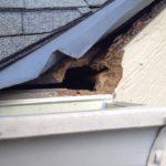 A small gap which bats fly through to enter an attic