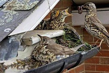 Animal Damage Repairs Columbus Oh Buckeye Wildlife
