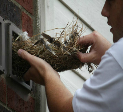 Birds In Vents Removal Of Bird Nesting Amp Mities Around