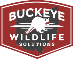 Buckeye Wildlife Solutions Logo: Columbus, OH & Central Ohio area animal removal & pest control company