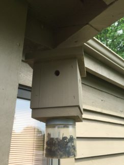 Carpenter Bees Spring Removal & Pest Control - Columbus, OH: A carpenter bee trap.