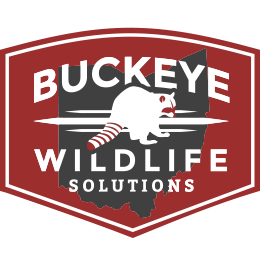 Buckeye Wildlife Solutions Logo