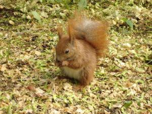 A squirrel feeding in a Columbus homeowner's yard.