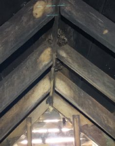 A colony of bats living in a Mount Vernon home. Call now to get rid of a bat in the house in Mount Vernon!